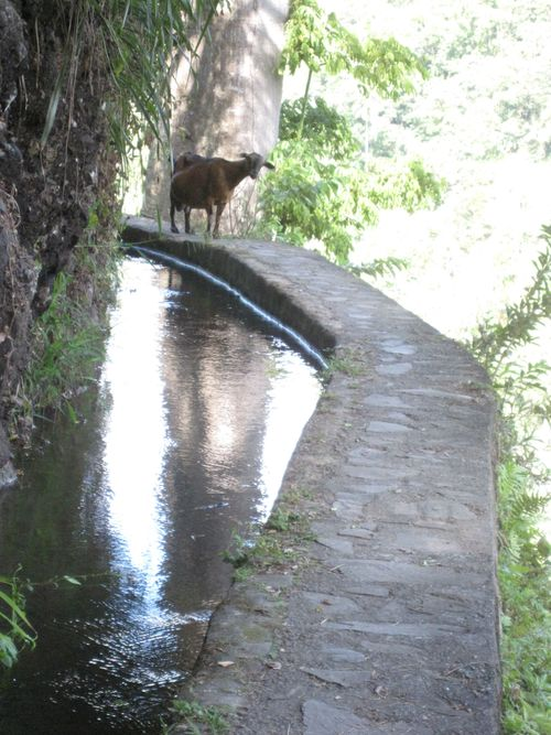 Height, water and goats, a lot to contend with!